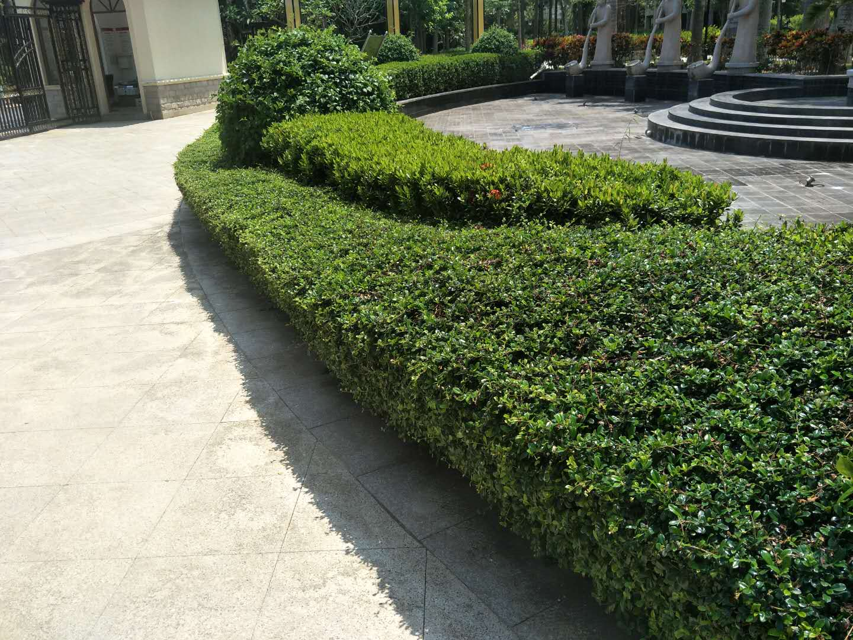 海南园林绿化景观